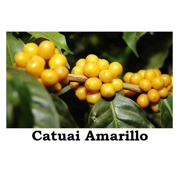 CAFE CATUAI AMARILLO