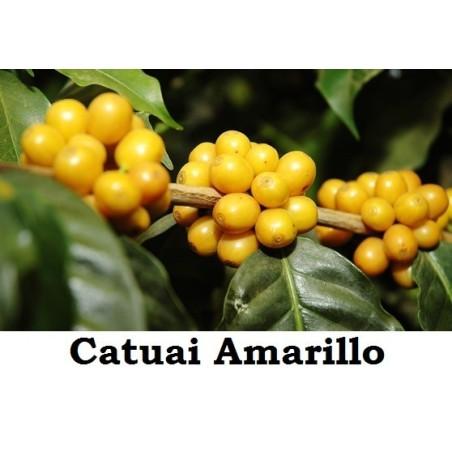 CAFÉ CATUAI AMARILLO 250g